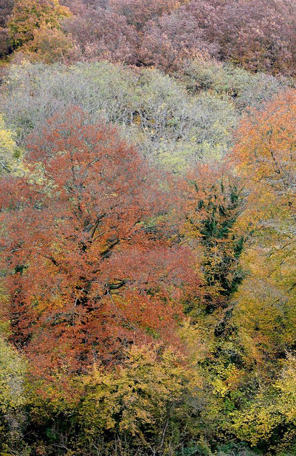 les forêts normandes sont riches de multiples essences