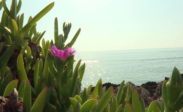La faune et la flore sont à découvrir tout au long du sentier.