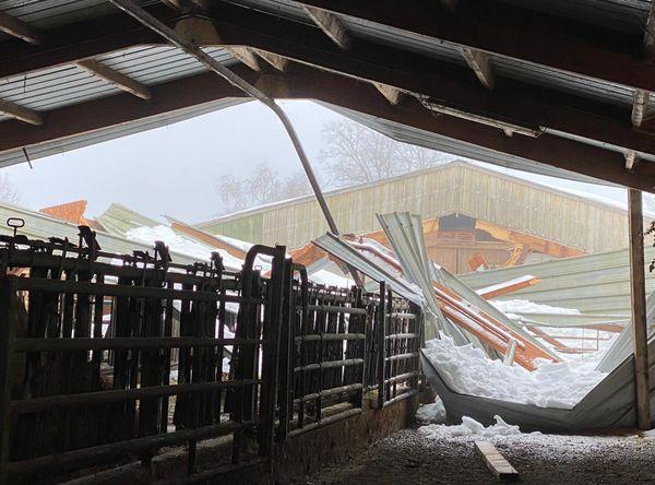 Au total ce sont 600 m2 de toiture de l'étable d'André Cazes qui se sont effondrés, heureusement sans tuer de bétail.