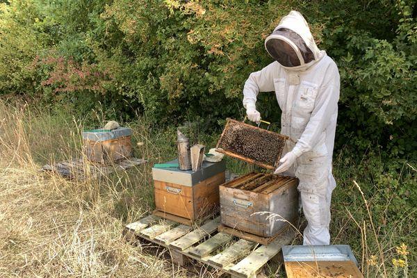Marc-Antoine Janody avec ses ruches en Montagne de Reims