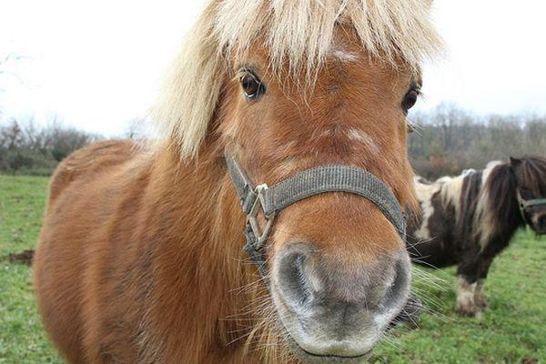 La députée de Haute-Garonne Corinne Vignon entendait dénoncer la souffrance physique et psychologique infligée aux poneys sur ce type de manège