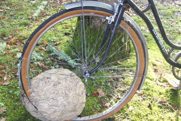 Des frelons asiatiques ont construit leur nid sur la roue de ce vélo, laissé à l'abandon pendant quatre mois dans un abri de garage. (photo prise en 2017 à La Brède, en Gironde)