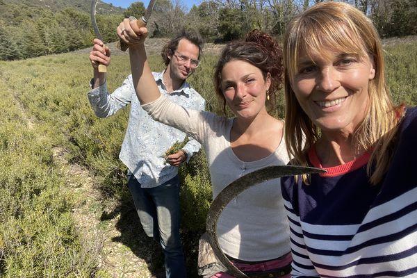 Récolte du romarin avec Nathalie Simon, Paul et Aline qui cultivent des plantes aromatiques