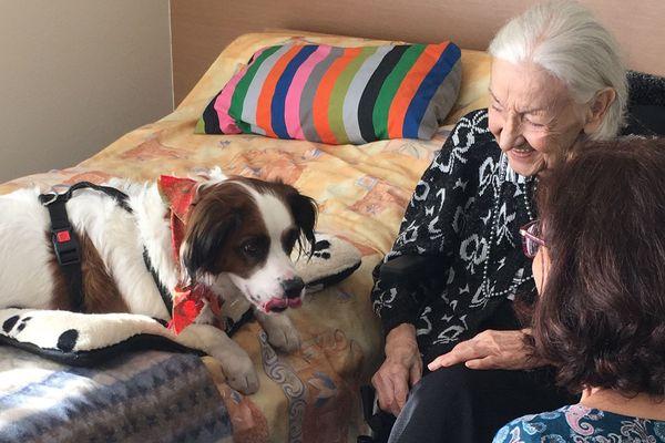 Véga, chienne accompagnatrice à l'EHPAD de Lezoux (Puy-de-Dôme), apporte bien-être et joie de vivre aux résidents.