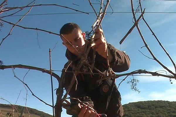 Cabrerolles (Hérault) - Nicolas, 23 ans s'occupe de sa vigne - février 2017.