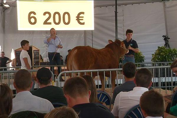 La vente aux enchères de reproducteurs limousins et génisses, lors du 51ème Festival de l'élevage de Brive.