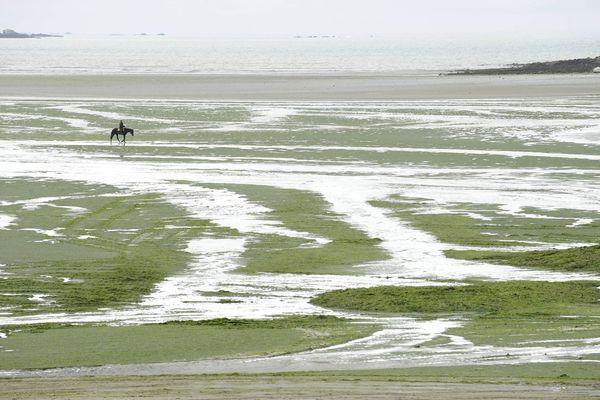 En 2009 à Saint-Michel-en Grève ( Côtes-d'Armor), le cavalier et propriétaire du cheval, qui avait perdu connaissance, avait été sauvé grâce à des témoins, mais l'animal était mort brutalement.