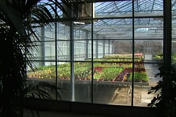 Les serres des services des Espaces Verts de Mâcon, où l'on fait pousser des dizaines de milliers de fleurs et de plantes