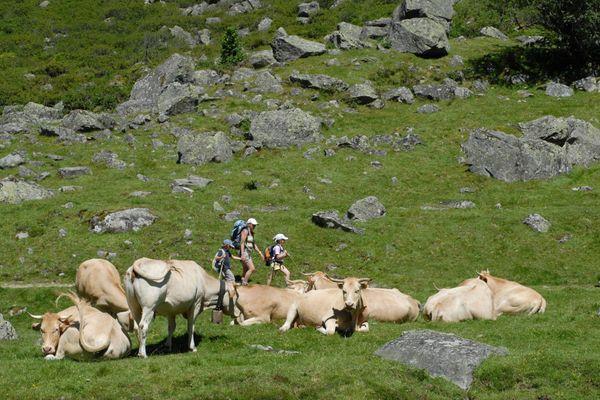 Des randonneurs passant près d'un troupeau dans les Pyrénées.