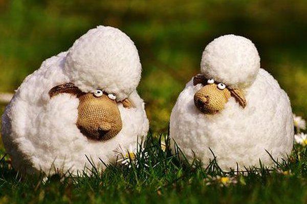 les moutons ça embêêêllit la ville!