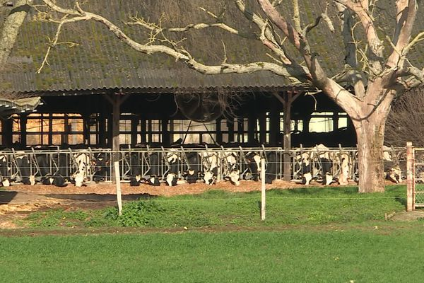 """Une ferme """"aux 1 000 vaches"""" à Courcoué, en Indre-et-Loire, a été autorisée à étendre son élevage fin janvier."""