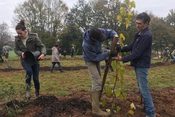 Plantation d'un verger collectif, à Dompierre-sur-Yon, en novembre 2019