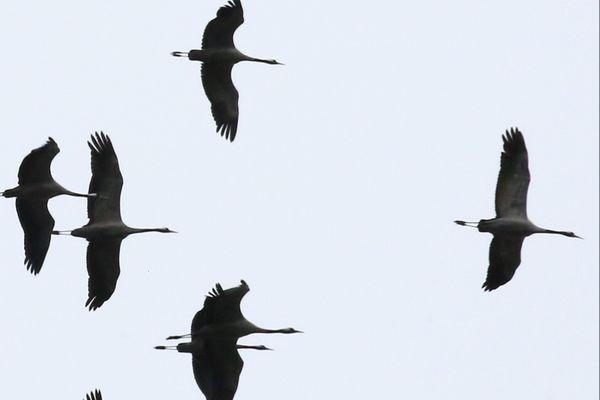 Les 3 et 4 octobre, venez observer les oiseaux migrateurs.