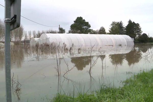 Dans le secteur de La Réole de nombreuses cultures sont noyées par la crue de la Garonne sur des terres déjà gorgées d'eau.