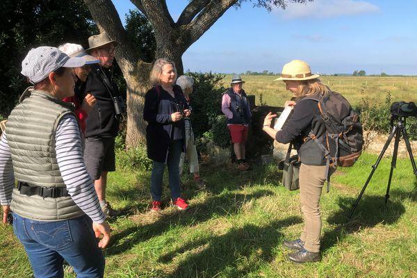 La Ligue pour la protection des oiseaux de Loire-Atlantique organise des sorties ornithologiques tout l'été