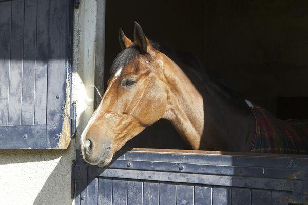 Deux chevaux ont été testés positifs à la boldénone, après l'ingestion de paille d'avoine ancienne sur l'hippodrome de Jullianges en Haute-Loire. Un lien de causalité a pu être établi. Photo d'illustration