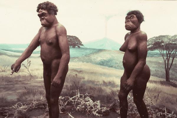 Photo de la reconstitution de Lucy (D) et de son supposé compagnon. Lucy est la femme préhistorique remontant à 3,5 millions d'années, découverte en 1974 dans la vallée du Rift en Ethiopie par l'Américain Donald Johanson et le Français Yves Coppens. La reconstitution a été effectuée en France par le taxidermiste finlandais Erik Granqvist au musée Préhistorama de Bidon dans l'Ardèche, et terminée le 19 juin 1989.