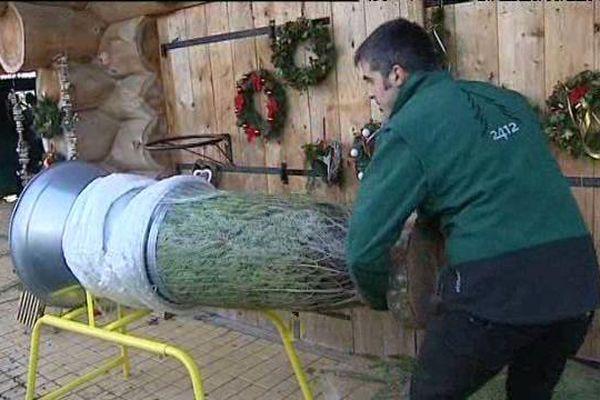 David Laurent prépare ses sapins quelques jours avant Noël