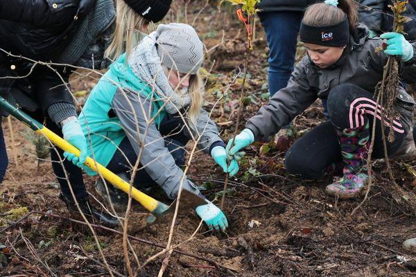 Après un petit cours des agents de l'ONF, les élèves de l'école de Censeau dans le Jura ont participé à la reforestation de la forêt de Joux