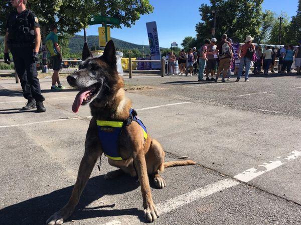 Jasper aux Eurockéennes ... Un chien qu'il ne vaut mieux pas voir s'approcher de vous.