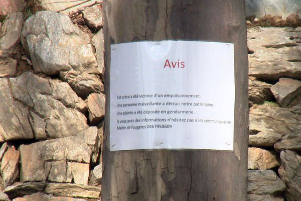 Le numéro de téléphone de la mairie de Faugères (0467950609) pour tenter de récolter des informations sur les vandales.
