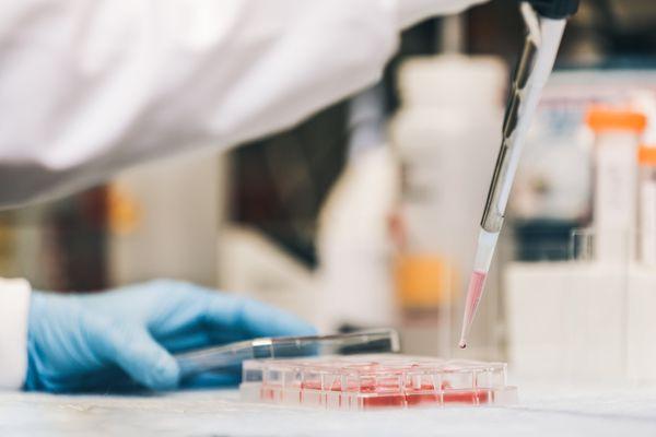 Le traitement est basé sur des anticorps issus de sérum de porc.