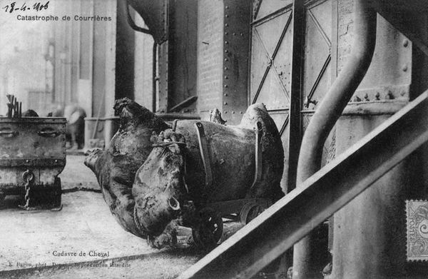 Un cadavre de cheval mutilé par l'explosion.