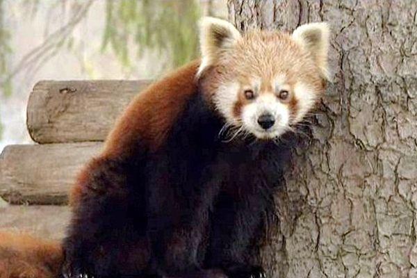 Quelque 5.000 animaux exotiques sont hébergés dans le plus grand parc animalier du royaume de Belgique.