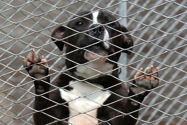 Les animaux retrouvés dans un appartement de Bischheim ont été confiés à la SPA. (Photo d'illustration)
