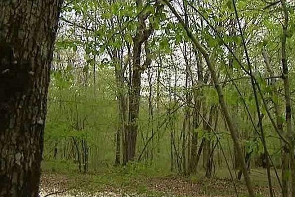 La première forêt pédagogique du futur parc national du Châtillonnais va être créée par des écoliers et des collégiens