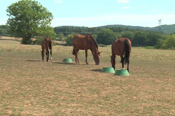 Les éleveurs tentent de s'organiser car, depuis quelques mois, des chevaux et des poneys sont retrouvés tués ou mutilés en France.