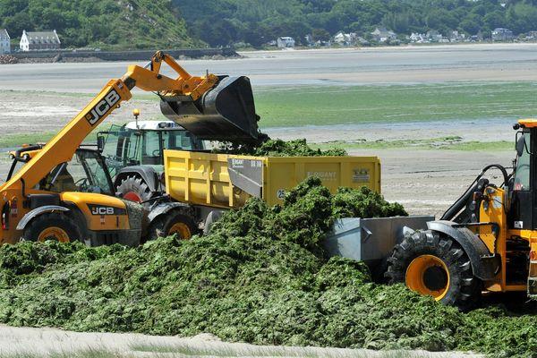 Ramassage des algues vertes sur les plages de Saint-Michel en Grève et Plestin-les-Grèves, dans les Côtes d'Armor.