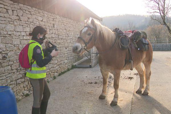 Marjolaine Dangleterre et son cheval Damino