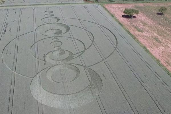 Des figures parfaitement géométriques ont fleuri sur 30 ares dans les champs de blé d'un exploitant près de Colmar.