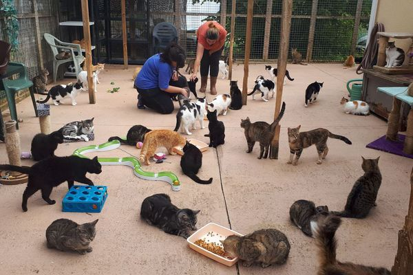 des chats dans un refuge