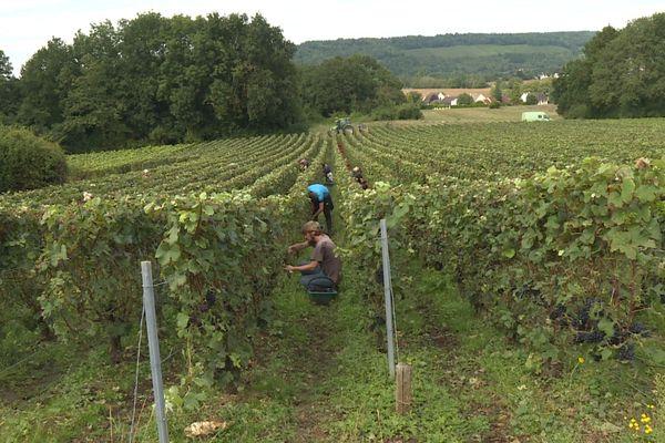 La météo a été dévastatrice pour ces vignes de champagne situées en Seine-et-Marne.