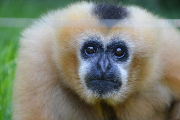 Les zoos sont aussi concernés par les mesures strictes de confinement.