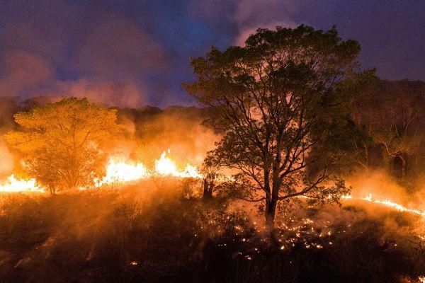 Un feu fait rage dans le Pantanal, une région de l'état du Mato Grosso.