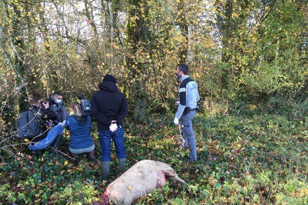 Une dizaine d'agents de l'Office Français de la Biodiversité pistent les loups.