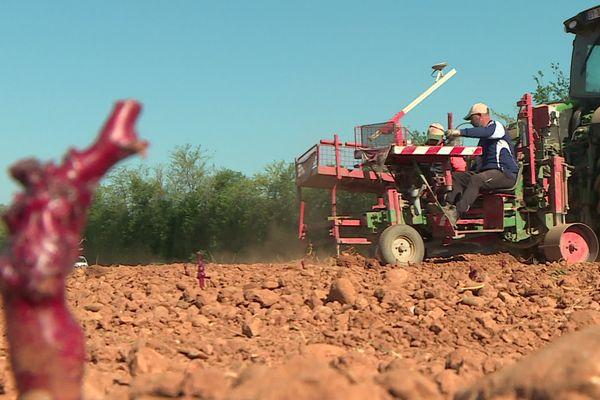 Face au risque de sécheresse, la Chambre d'Agriculture du Gard plante de nouveaux cépages plus résistants au Mas d'Asport, à Saint-Gilles - 23 avril 2021.