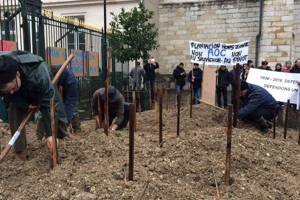 Les viticulteurs plantent des vignes devant la préfecture du Cher en guise de protestation