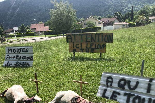 Pour alerter la population, l'éleveur dont le troupeau a été attaqué a imaginé cette mise en scène à l'endroit où ses bêtes ont été tuées.