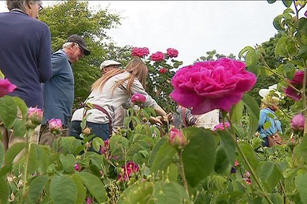 Des variétés de roses très rares et très anciennes sont à découvrir dans ce jardin extraordinaire!