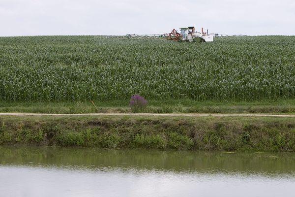 Un champ aux abords d'un cours d'eau - Photo d'illustration
