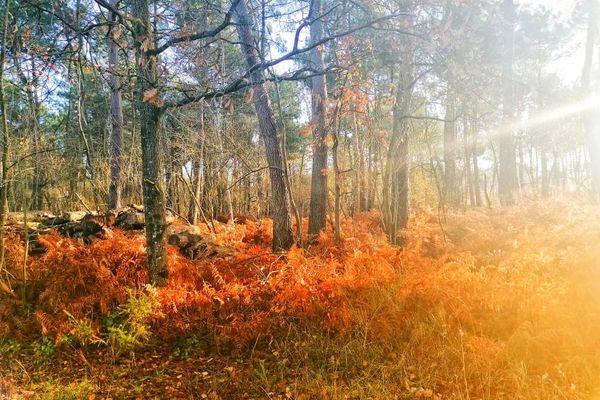 Rayons de soleil à travers la forêt de Morton (86)