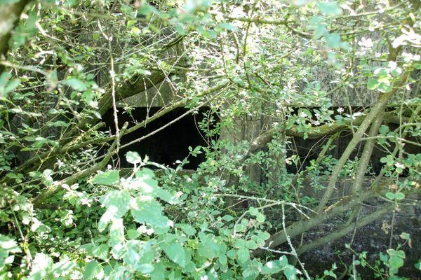 L'ancien bunker de l'aérodrome de Caffiers derrière les branchages.