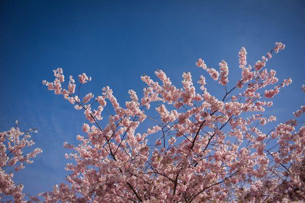 Ça sent presque le printemps en région Centre-Val de Loire.