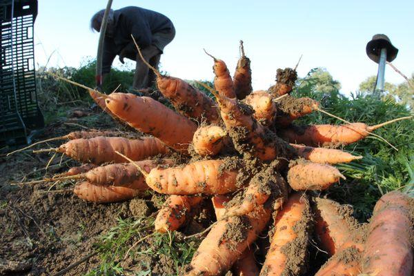 En 2020, 30 000 hectares sont consacrés à l'agriculture biologique. (Illustration)