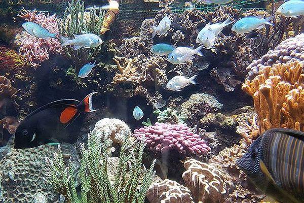 L'aquarium agathois, achevé par les confinements, ferme définitivement ses portes et ses bassins.