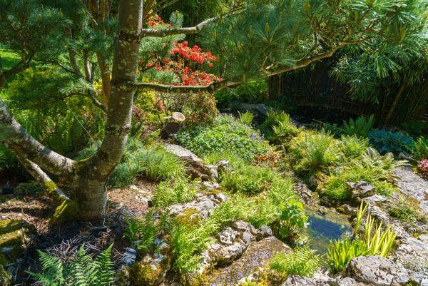 Les bassins aux fougères du jardin d'Acorus